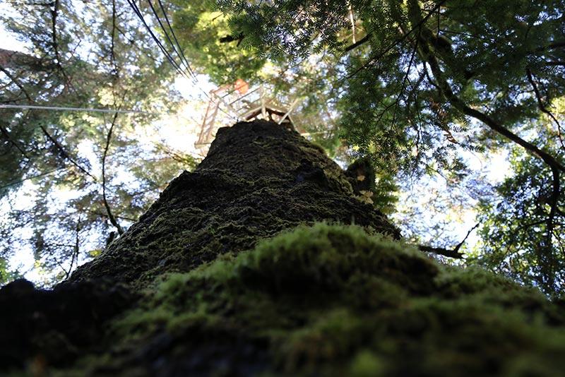 1 The Tree Climb