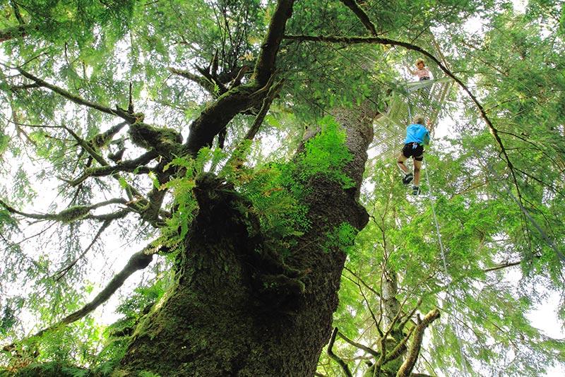 2 The Tree Climb